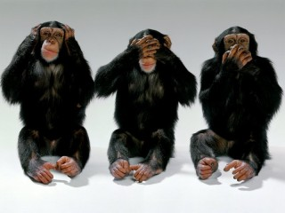 monkeys-hear-no-evil-